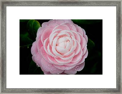 Pefectly Pink Framed Print by Rich Franco