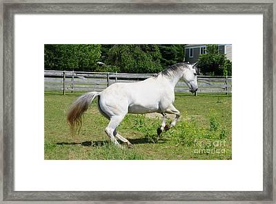 Pegasus Framed Print by Paul Ward