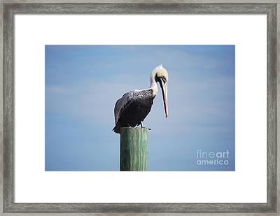 Pelican 1 Framed Print by Gordon Mooneyhan