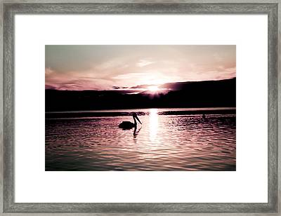 Framed Print featuring the photograph Pelican At Sunset. by Carole Hinding