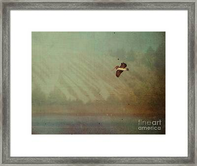 Pelican Framed Print by Billie-Jo Miller
