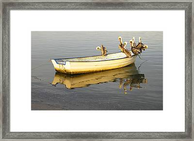 Pelican Express Framed Print by Anne Mott