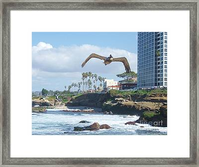 Framed Print featuring the photograph Pelican Flight by Jasna Gopic