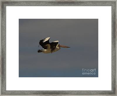 Framed Print featuring the photograph Pelican In Flight 3 by Blair Stuart