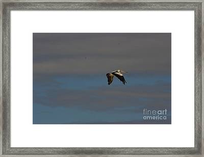 Framed Print featuring the photograph Pelican In Flight 4 by Blair Stuart