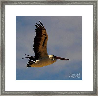 Framed Print featuring the photograph Pelican In Flight by Blair Stuart