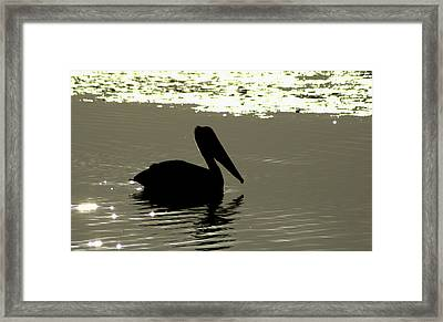 Pelican In Silioutte Framed Print by John Wright