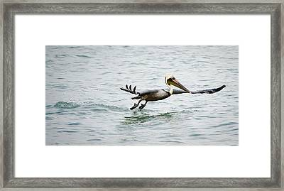 Pelican Landing Framed Print by Mike Rivera