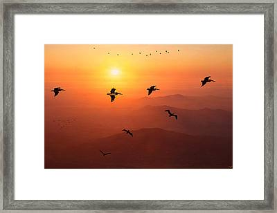 Framed Print featuring the photograph Pelican Migration by Chris Lord