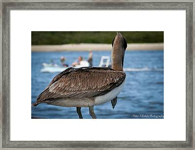 Pelican People-watching Framed Print