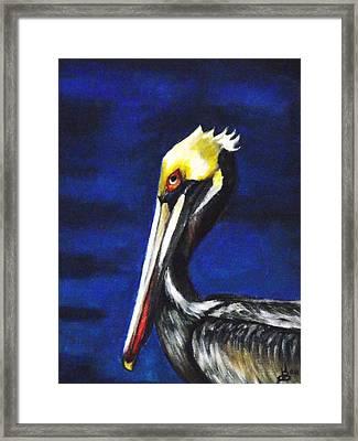 Pelican Portrait Framed Print by Kim Selig