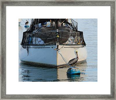 Framed Print featuring the photograph Pelican Pose  by Coby Cooper
