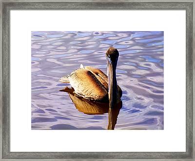 Pelican Puddles Framed Print by Karen Wiles