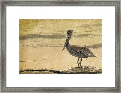 Pelican Framed Print by Rebecca Cozart