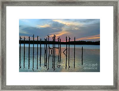 Framed Print featuring the photograph Pelican Resting End Of Day by Dan Friend
