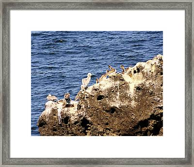 Pelican Rock Framed Print by Chris Anderson