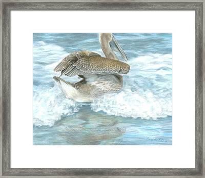 Pelican Surf Framed Print