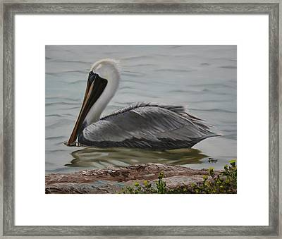 Framed Print featuring the painting Pelican Swim by Jimmie Bartlett