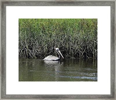 Pelican Swimming Framed Print by Al Powell Photography USA