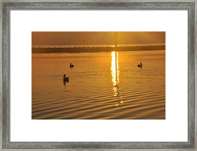 Pelicans And Sunrise Framed Print