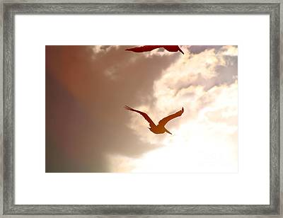 Pelicans At Sunset Framed Print by Lori Leigh