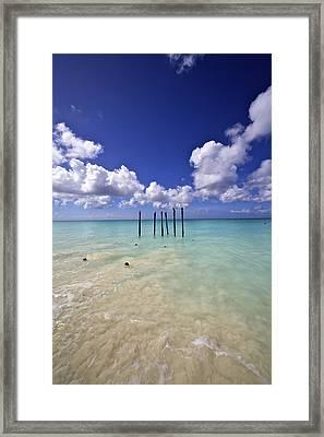 Pelicans Of Sunny Aruba Framed Print