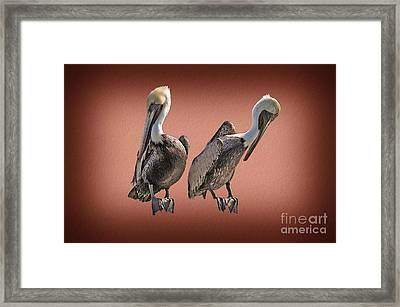 Framed Print featuring the photograph Pelicans Posing by Dan Friend