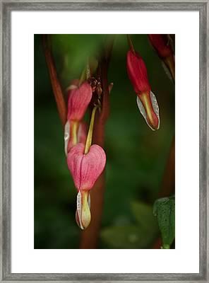 Pendants Framed Print