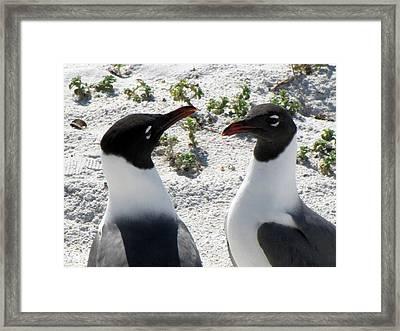 Penguins 2 Framed Print