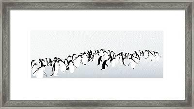 Penguins Framed Print by Maya Shleifer