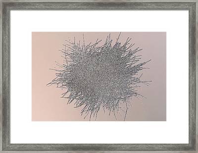 Penicillium Mould Colony Framed Print