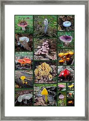 Pennsylvania Mushrooms Collage 2 Framed Print by Mother Nature