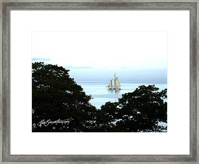 Penobscot Bay Sailing Framed Print by Ruth Bodycott