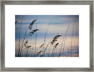 Pensacola Beach Sea Oats Framed Print by Steven Gray