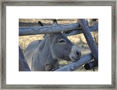 Framed Print featuring the photograph Pensive Donkey by Michael Dohnalek