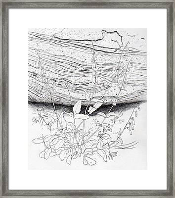 Penstemon Framed Print
