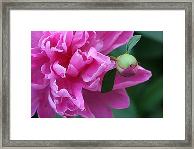 Framed Print featuring the photograph Peony And Bud by Peg Toliver