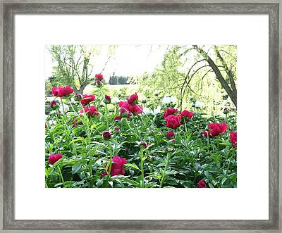 Peony And Willow Tree Framed Print by Rebecca Overton