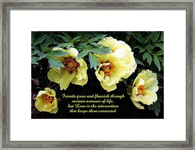 Peony Friends Framed Print by Deborah  Crew-Johnson