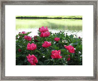 Peony Lake Reflections  Framed Print by Rebecca Overton