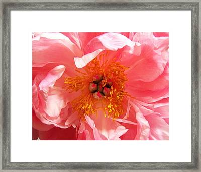 Framed Print featuring the photograph Peony by Peter Mooyman