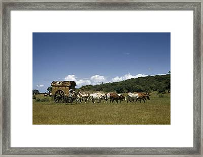 People, Oxen, And Horses Reenact Framed Print by Luis Marden