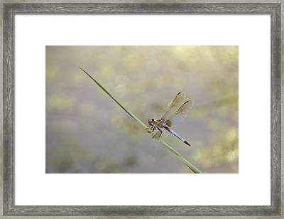 Framed Print featuring the photograph Perched Dragon In Sepia by JD Grimes