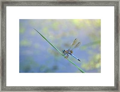 Framed Print featuring the photograph Perched Dragon by JD Grimes