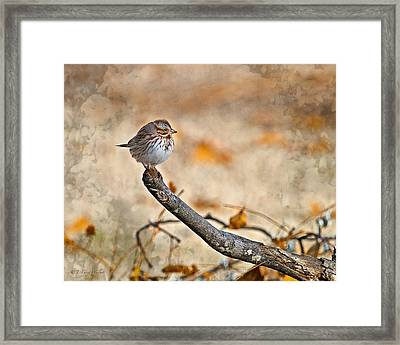 Perched High - Baby Sparrow Framed Print