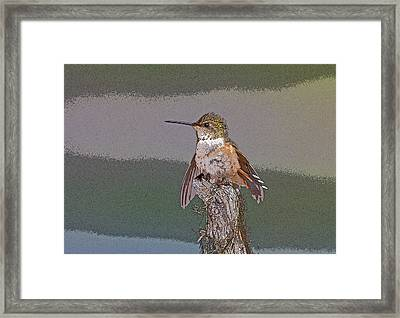 Perched Hummingbird- Abstract Framed Print by Tim Grams