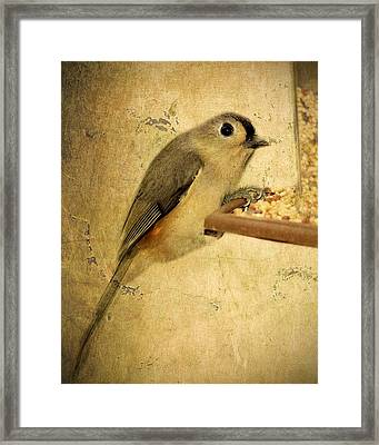 Perched Framed Print by Kathy Jennings