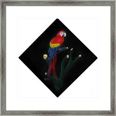 Perched Macaw Original Framed Print by Peter Piatt