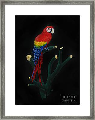 Perched Macaw Framed Print by Peter Piatt