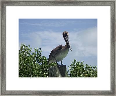 Perched Pelican Framed Print